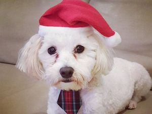 The Chronicle readers share Christmas pet photos