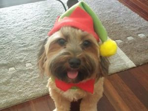 Dressed up pets bring holiday cheer
