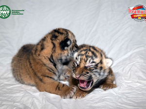 WIN a family trip to see Dreamworld's big cats