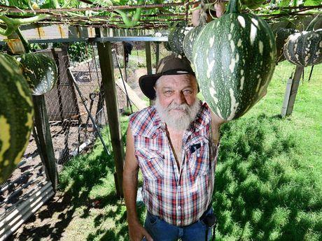 GREEN THUMB: Local gardener John Raatz of North Booval has grown a hanging pumpkin trellis in his back yard.