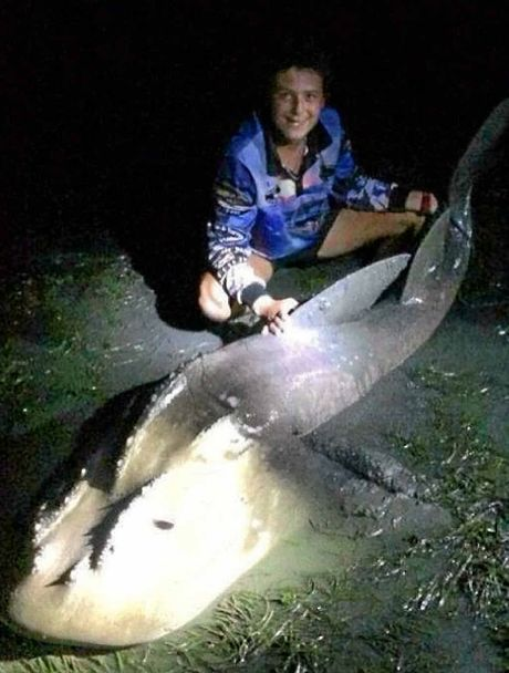 BOWMOUTH GUITARFISH: Caught by Steven Murphy on Bribie.