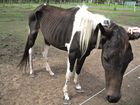 No jail, fines or conviction recorded for starving horses