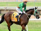 Manzelmann a favourite at Moranbah Race Club meet