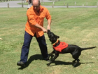 """DOGS like Willow used to sniff out """"vicious"""" and """"dangerous"""" fire ants are being credited for ridding Gladstone of the pests years ahead of schedule."""