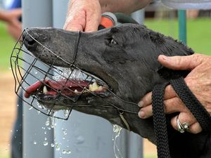Protest against greyhound racing industry this weekend