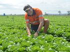 Lockyer Valley not affected by salad recall