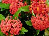 Valerie and Gerry Zwart look at flowering plants and trees that are flourishing right now