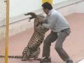 VIDEO: Leopard attacks man in Indian school