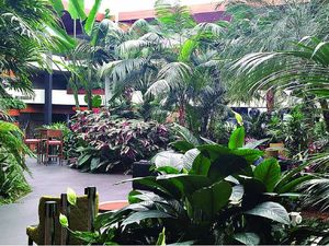Tropical Canberra? Atrium garden an inspiration