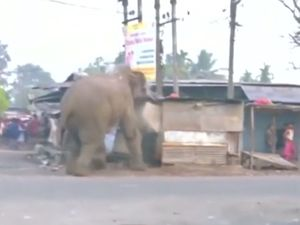 WATCH: Wild elephant goes on rampage in India