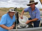 Fingerlings a boost for Lockyer Valley waterways