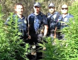 Tip off leads Tara Police to large cannabis bust