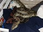 Pregnant woman bitten by snake as she walked to bathroom