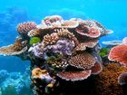 OPINION: Coral could suffer