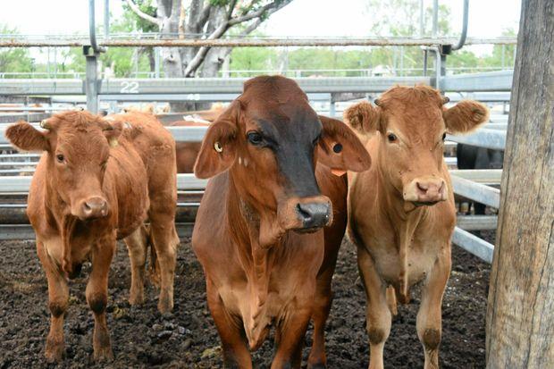Casino cattle sale bonuscode fr casino tropez