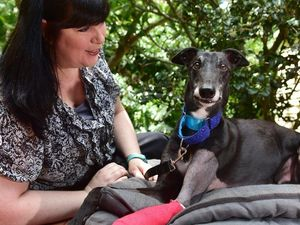 Hoblet's story: A greyhound's life turned around