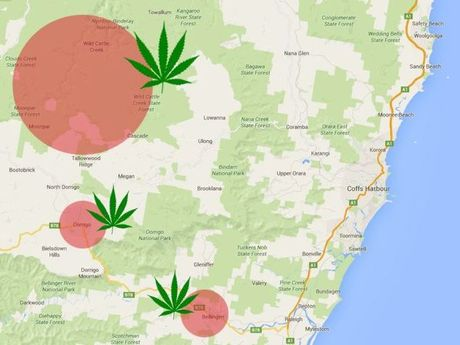 Coffs Clarence LAC Police and NSW Drug Squad seized 2617 plants worth $5.23 million from state forest and national parks around Bellingen, Dorrigo and Nymboida across the four day Strike Force Hyperion operation,.