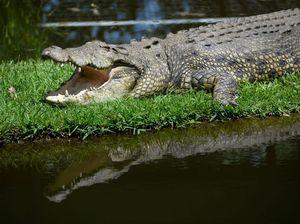 BUDGET: Crocodiles just one of the big winners for Mackay