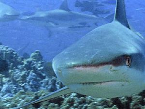 OUR SAY: High cost of shark protection