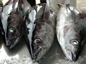 Pacific tuna: 'Larceny on the high seas'