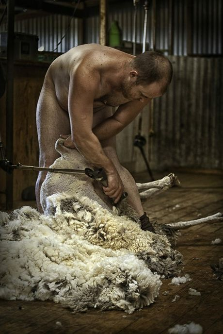 Jacqui Bateman took this photo of shearer Daniel Telfer on her property in 2010. The image has now been used to rebut Peta's anti wool campaign.