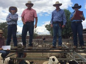 Bidders in action at the Warwick Sheep Sale