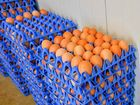 CONSUMER advocacy group Choice says 213 million eggs sold in Aussie shops every year fall short of consumer expectations.