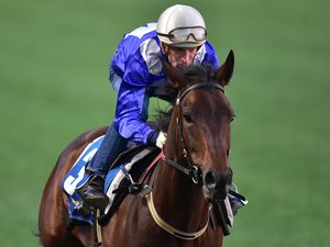 Winx will start the Warwick Stakes as a very short-priced favourite