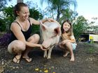 Catherine Buckel and her daughter Olivia, 7, of Chuwar are relieved to keep their pig Franny. Photo: David Nielsen / The Queensland Times