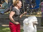 Lisa Carpenter with Zac the poodle. 2016 Toowoomba Royal Show. Wednesday 06 Apr , 2016.