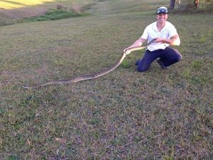 Sunshine Coast Snake Catcher Richie Gilbert holding up a coastal carpet python retrieved from a home at Lake McDonald