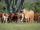 Productivity Commission wants new animal welfare standards