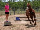 BREANNA Cook is determined to make a name for herself in the horse industry.