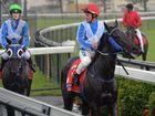 The race one winner was Craiglea Amity ridden by Peter Cullen.  Photo Tony Martin / Daily Mercury