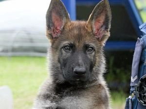 Fetching new name for police puppy Warrior