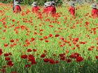 Full list of the Anzac Day services taking place around the region.