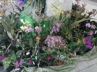 Grafton District Orchid Society will be holding our annual Autumn Show at Grafton Shoppingworld from 7am Tuesday 3rd May to 4pm Friday 6th May .  Entry is free.