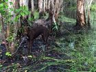 AL Kidner posted a photo of a dog on his Facebook page he found tied up to a tree in Mackay.