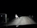 Dash Cam: Roo takes on car