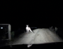 Kangaroo leaps car.