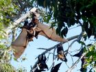 A DOCTOR is warning bats are spreading a deadly disease and is asking residents to avoid touching them.