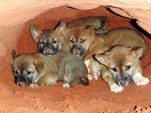 Seven of the Sunshine Coast's worst pests