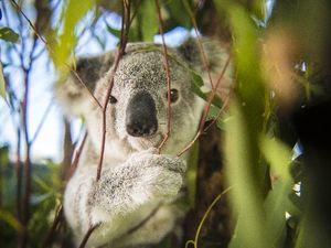 NiE Wild Australia
