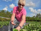 A sweet season for the Coast's strawberry growers
