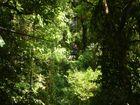 Reporter Rae Wilson zip-lining across tree canopies in Monteverde in Costa Rica.