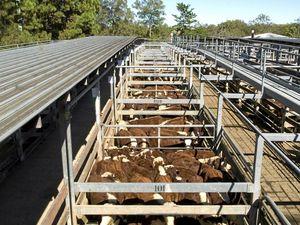 Richmond Valley Council to increase saleyard fees