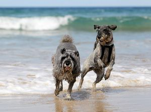 Coast's new beach rules that have some barking mad