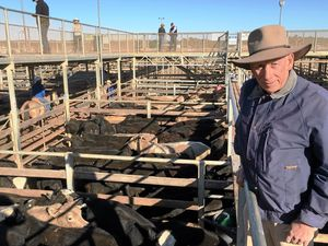 Graziers hold out for winter rain predictions