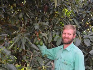 Growers happy as avocado consumption skyrockets