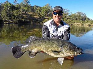 Oh my cod! Big catch in Mann River